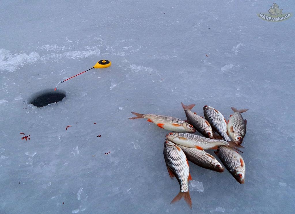 Зимняя рыбалка. ловля плотвы секреты ловли